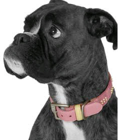 Free Designer Dog Accessories inc Collar & Tag