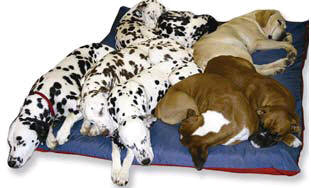 Free Dog Bed from Kennel Mate