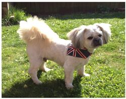 10 Union Jack Dog Bandanas From Wuff in Style To Giveaway!