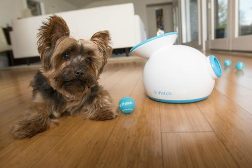 Win an iFetch Automatic Ball Thrower!