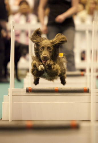 Win Tickets to the 'London Pet Show'!