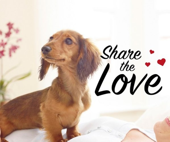 Share the Love & Win Prizes with PetSafe®!