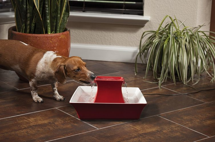 Win a Drinkwell® Ceramic Pagoda Pet Fountain!