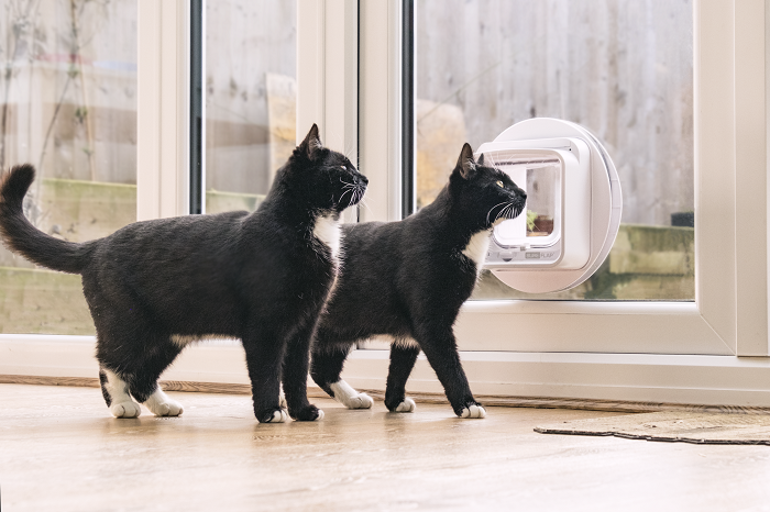 Win a SureFlap Microchip Cat Flap!