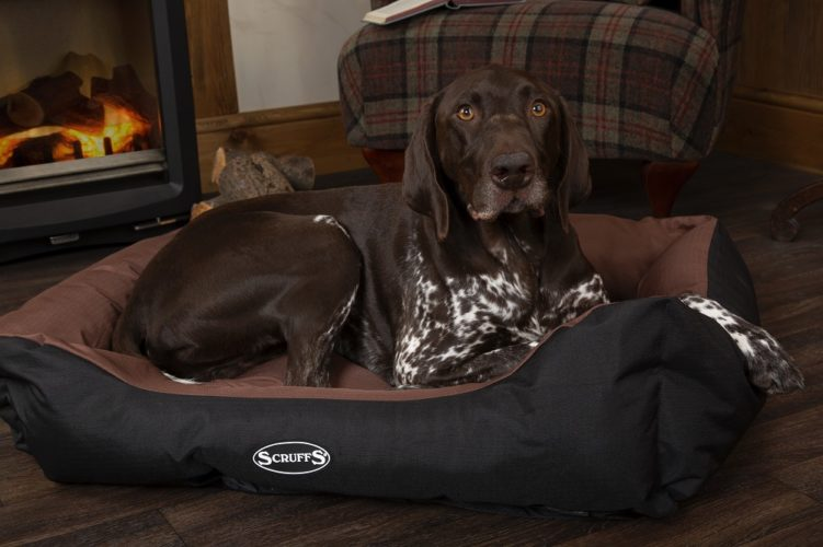 Win a Scruffs® Expedition Box Bed!
