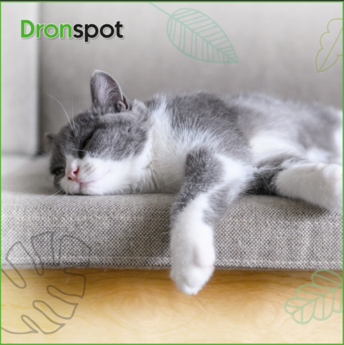 Does Your Cat Sleep in Odd Positions? Win a Luxury Cat Bed!