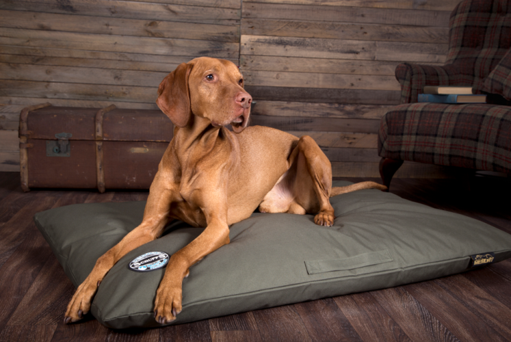 Win a Scruffs Expedition Memory Foam Mattress!